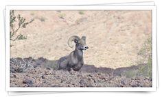 Wildlife in Quartzsite  Quartzsite Geocachers