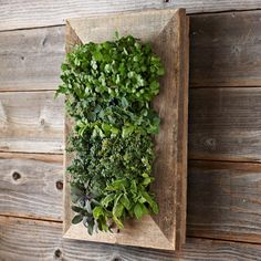 Grow a vertical herb garden on any sunny wall in your home. This planter mounts securely to the wall and offers a unique, space-saving way to harvest fresh herbs. Just fill the cells with the herbs of your choice, and water as needed through the top irrigator; the hidden collectortray at the bottom catches excess runoff.  Reclaimed Vertical Wall Planter #WilliamsSonoma