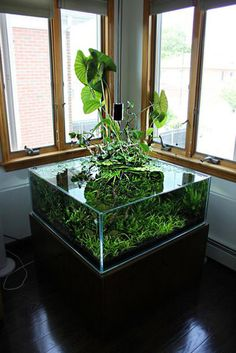 42 Astonishing Aquarium Design Ideas For Indoor Decorations - An aquarium is an enclosure with at least one clear side that houses water-dwelling fish, plants and other livestock and decorations. An aquarium offe. Planted Aquarium, Aquarium Terrarium, Nature Aquarium, Home Aquarium, Saltwater Aquarium, Aquarium Fish Tank, Freshwater Aquarium, Fish Tanks, Water Terrarium