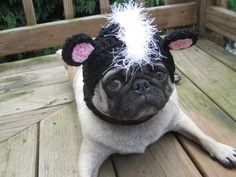 Pickles, The Etsy Hat Model - @gruff....more people dressing up their pugs!