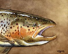 BROOK TROUT Fly Fishing Art Print Signed by by k9artgallery