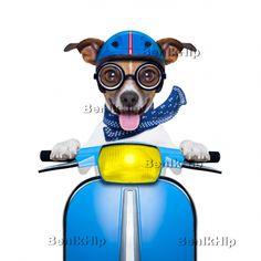 Strijkapplicatie Hond op vespa blauw