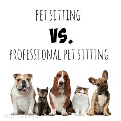Cheap Pet Sitting And Dog Walking Website Template