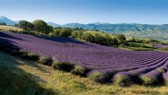 A relax escape in French Riviera #placetovisit #provence #relax #lavender