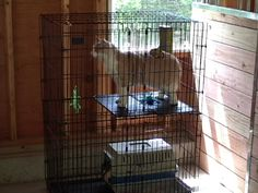 Classic acclimation cage set-up for barn cat - right in front of the window. This fellow became a house cat.