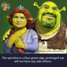 The spirulina is a blue-green alge, prolonged use will not have any side effects. Spirulina, Side Effects, Blue Green, Marketing, After Effects