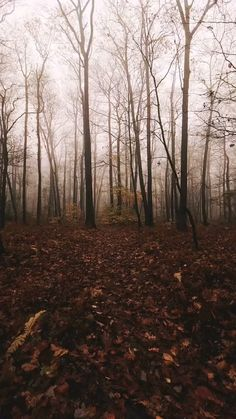 Dark Autumn, Autumn Cozy, Autumn Aesthetic, Nature Aesthetic, Beautiful Nature Scenes, Beautiful Places, Halloween Backgrounds, Dark Forest, Aesthetic Pictures