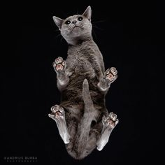 visu-chats-13
