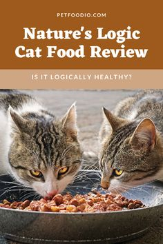 Nature's Logic Cat Food: Logically Healthy? - PetFoodio.com Pretty Cats, Beautiful Cats, Cat Recipes, Dog Food Recipes, Kittens Cutest, Cats And Kittens, Healthy Cat Food, Cat Love Quotes, Cat Diet
