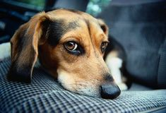 Tips to help when your puppy/dog does not like the car