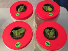 Beginners Hydroponics! Fresh Tomatoes All Winter! - YouTube