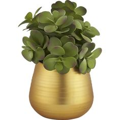 Free Shipping.  Shop potted eucalyptus plant.   Just the thing for people who are bad at plants.  Our faux succulent is right on-trend and saves you all the over/under watering stress.  Bonus: Beautiful gold shines chic on a shelf/table.