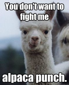 You don't want to fight me alpaca punch.  ALPACA