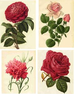 Decoupage Die Cut Roses - - Yahoo Image Search Results