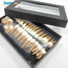 Cheap Regalo Dental verosimilitud comunicación dentista productos modelos de dientes Odontologia los dientes permanentes modelo doble del color, Compro Calidad Para Blanquear los dientes directamente de los surtidores de China:           Dental Regalo verosimilitud modelos odontologia Comunicación Productos Dentista Diente dientes modelo de