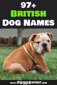 Your dog deserves an adorable English dog name that has personality and a British flair! Check out our list of more than 97 British Dog Names. #britishdognames #dognames