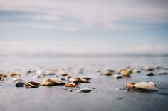 https://flic.kr/p/DzUJwG | Kawhia Ocean Beach, New Zealand | a bunch of shells at Kawhia Ocean Beach, New Zealand. It's such a beautiful place but i felt like it's kind of a secret tip as it was so empty.