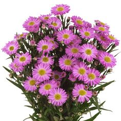 FiftyFlowers.com - Aster Flowers Lavender
