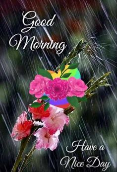 Rainy Morning, Good Morning Post, Good Morning Images, Gm Images, Beautiful Rose Flowers, Good Morning Greetings, Good Day, Saved Items, Mornings