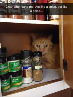 Just Act Like A Spice #cats #funny
