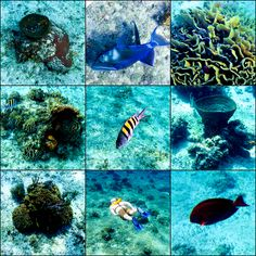 Snorkeling in Cozumel on a Disney Cruise
