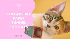 best cardboard cat tunnel Cat Lover Gifts, Cat Lovers, Cat Tunnel, Take A Nap, Making Out, Biodegradable Products, Traveling By Yourself, Eco Friendly, Cats