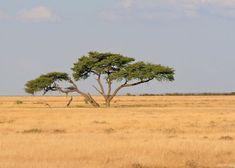 african savannah - Google 検索