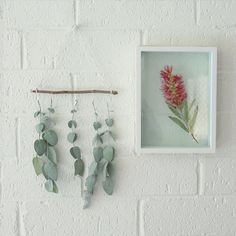 Make your own wall art from native flora Eucalyptus Leaves, Small Leaf, Printed Linen, As You Like, Nativity, Flora, Bedroom Decor, Gallery Wall, Wall Art