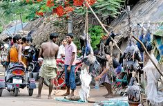 Large-scale Waterfowl Slaughter in Puducherry