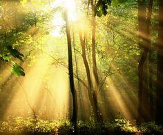 Wowwe wat schijnt de zon hier mooi doorheen!