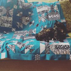 Approval by catnapper. Thanks to donnab8 for another cool mystery quilt. by raglanbee