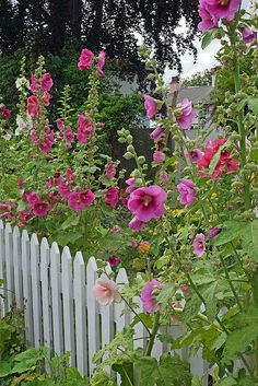 <3 White Picket Fence <3