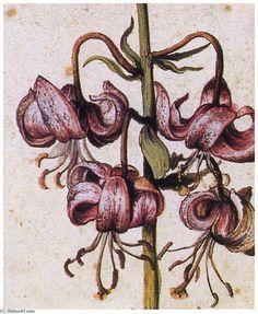 'Lillium martagon (Détails)' de Albrecht Durer (1471-1528, Germany)