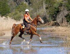 The Barefoot Endurance Horse - Part2