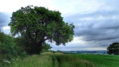 Which tree has been named as the European Tree of the Year? Find out here:  http://bit.ly/1Yvs22U