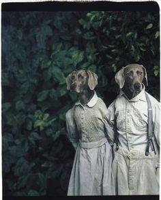 William Wegman : le portrait qui a du chien William Wegman, Weimaraner, Caricatures, Animals And Pets, Cute Animals, Clever Animals, Animal Fun, Animal Pics, Animal Heads