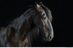 Stunning Equine Photography by Peter Samuels