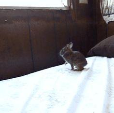 Komik Tavşan Gifi