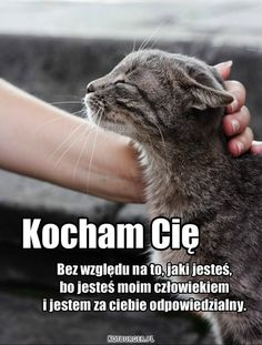 Kot to nie zwierzę, to stan umysłu… Animals And Pets, Funny Animals, Cute Animals, Big Cat Family, I Still Want You, Happy Campers, Words Quotes, Techno, Positive Quotes