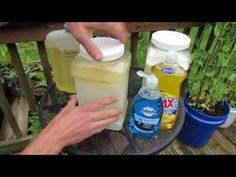 The Reasons & Details on How Much Soap to Use in Garden Oil Sprays: IT VARIES! - TRG 2016 - YouTube