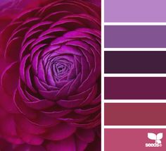 flora tones color escape - gorgeous color palette inspiration idea - purple and pinks