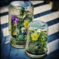 DIY: Want To Make A Pansy Terrarium In A Mason Jar?