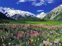 Mt. Cook, New Zealand. #travel