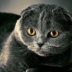 #cat #cats #blackcat #blackcats #gato #gatos #gatonegro #gatosnegros #sunny