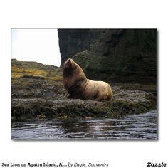 Sea Lion on Agattu Island, Alaska Postcard  #sea #lion, #alaska, #agattu #island, #wildlife, #water, #reflections, #nature, #aleutian #usa, #america #postcard