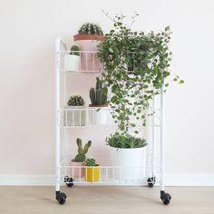 Maak het overal gezellig in huis met de verplaatsbare trolley van HEMA. #HEMAwonen #plant #cactus