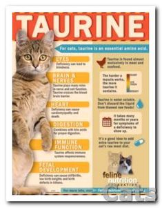 No Bull. Taurine Is a Must for Kitty - Feline Nutrition.