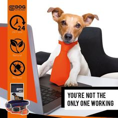 Learn more about DOG STREAMZ unique non-invasive magnetic dog collars. Developed to support all dogs of any age. Check out the website for information on symptoms found in the canine community such as Cat Care Tips, Dog Care, Dog Kennel Designs, Unique Dog Collars, Dog Playground, Pumpkin Dog Treats, Dog Agility, Homemade Dog, Dog Behavior