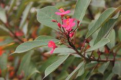 pink cat flower, lovely
