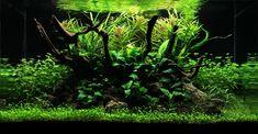 Myst Aquascape   by Philipp Tauchmann
